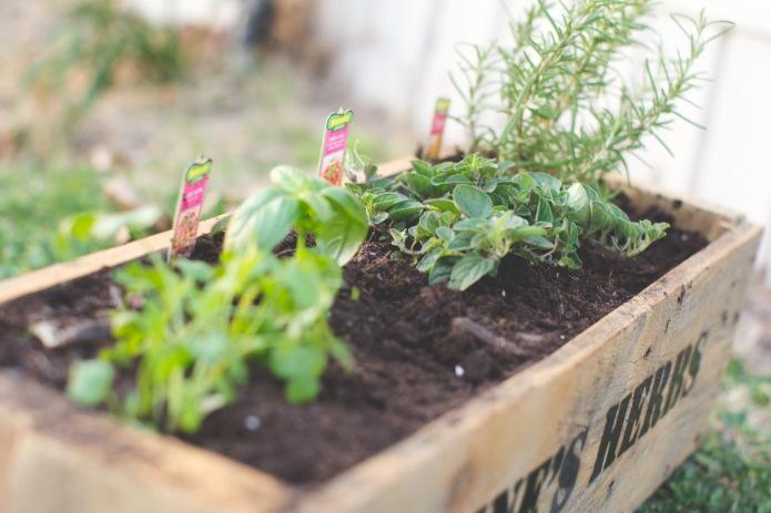 Gardening-5