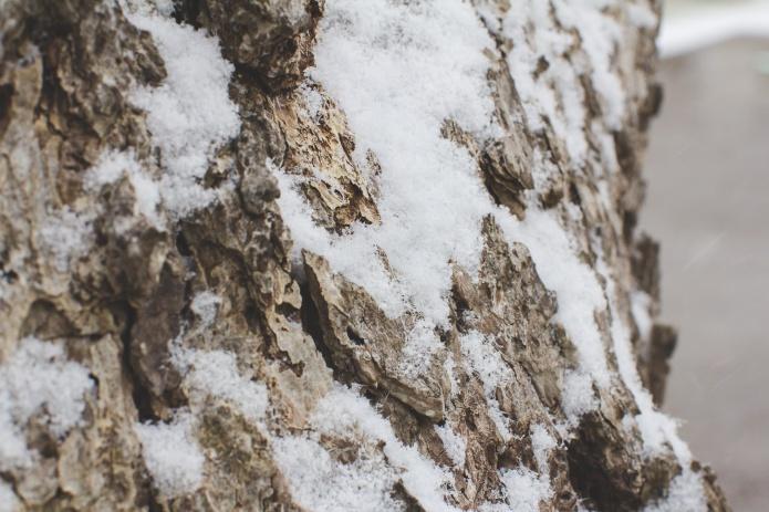 Lyla & Paisley snow-6