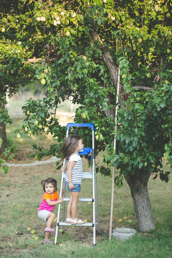 Picking Pears-2