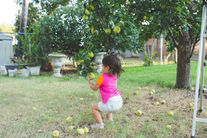 Picking Pears-24