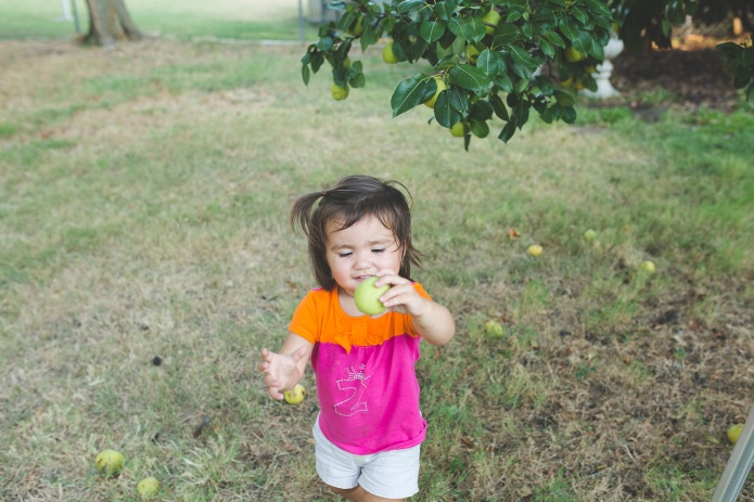 Picking Pears-25