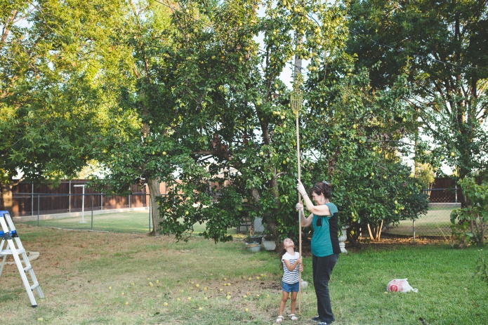 Picking Pears-29