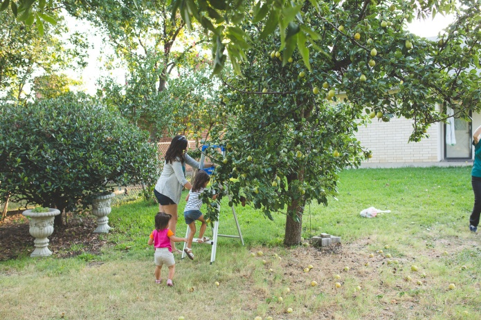 Picking Pears-31