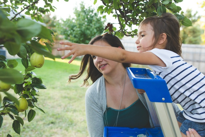 Picking Pears-32