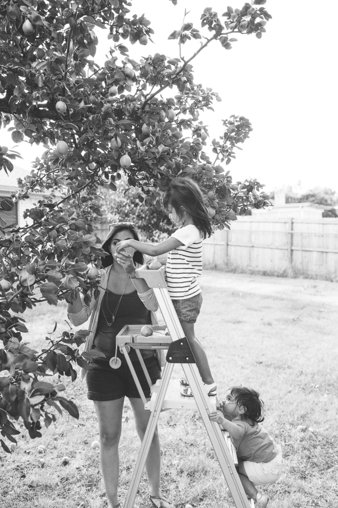 Picking Pears-33