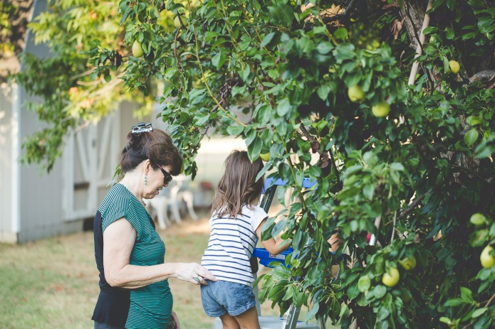 Picking Pears-4