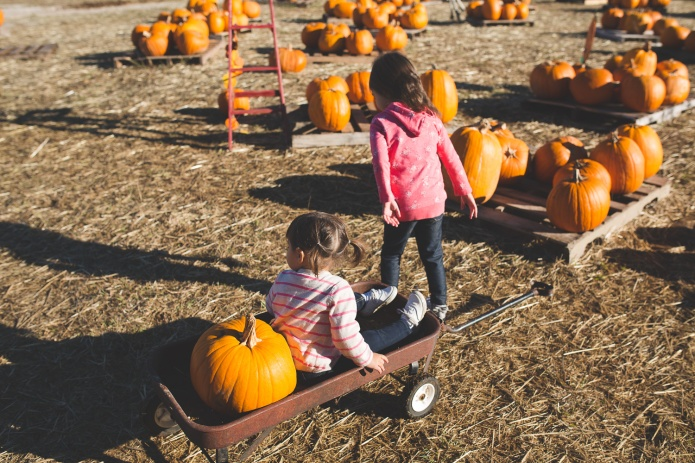 Pumpkin Patch 2015-14