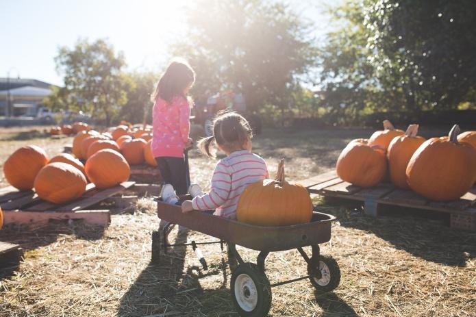 Pumpkin Patch 2015-16