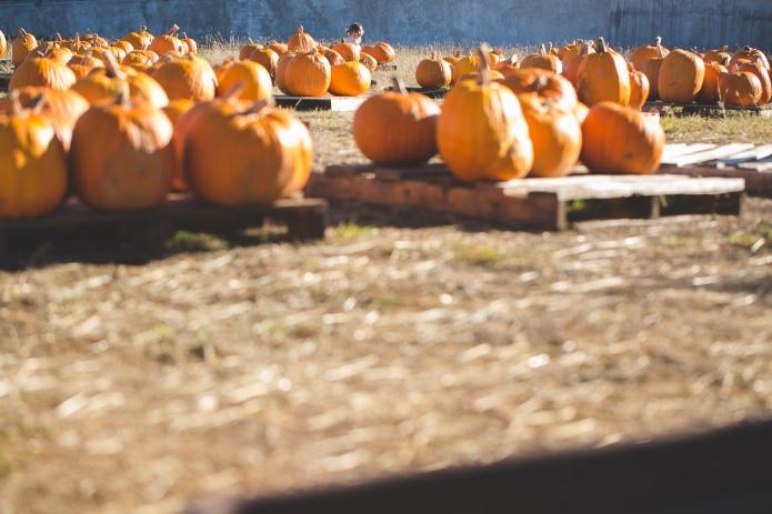 Pumpkin Patch 2015-21