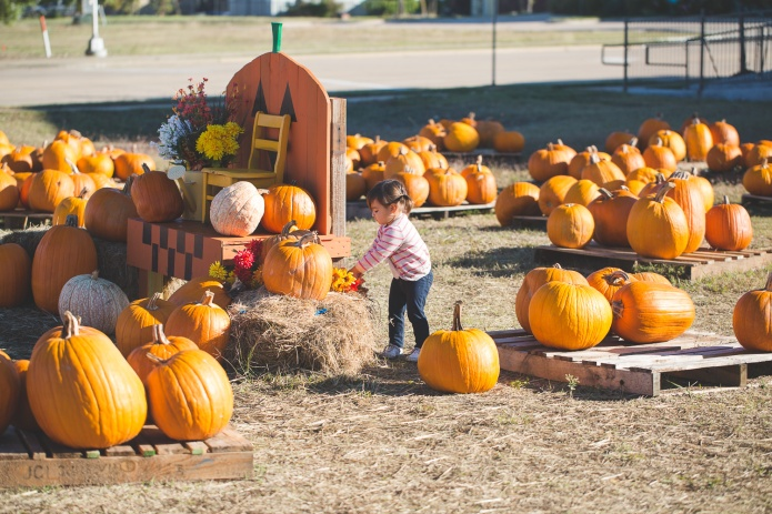 Pumpkin Patch 2015-22
