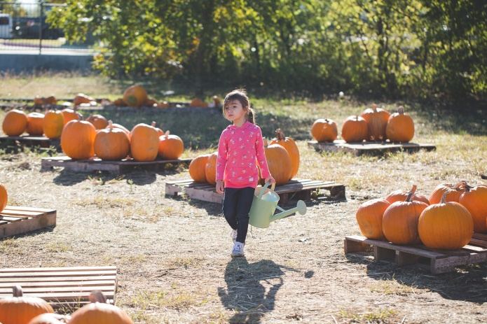 Pumpkin Patch 2015-24