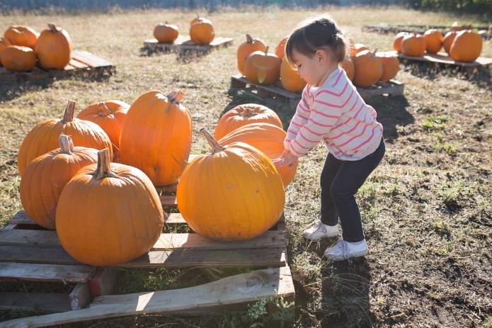 Pumpkin Patch 2015-8