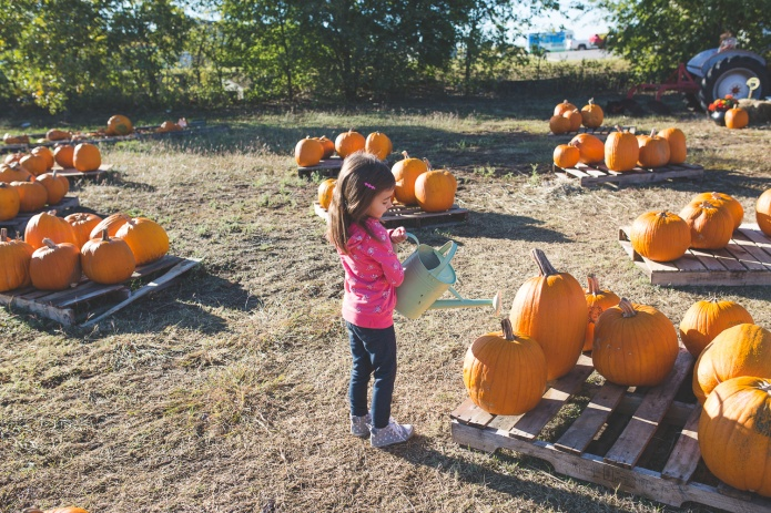 Pumpkin Patch 2015-9